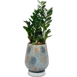 관엽식물(금전수) ft5018