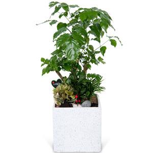 관엽식물(녹보수) ft5040